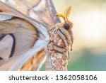 Face Butterfly Macro