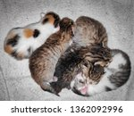 photo five little kittens of different color lie on top of each other on a white wool mat.