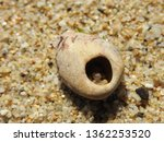 Beach Stone With Hole In The...