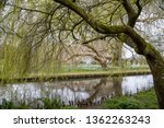 Old Willow Tree Weeping Over A...