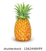 ripe pineapple isolated on... | Shutterstock .eps vector #1362448499
