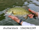 Smallmouth bass caught and released in the Snake River, Idaho
