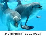 ocean life   couple of dolphins ... | Shutterstock . vector #136249124