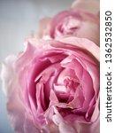 pink rose bouquet | Shutterstock . vector #1362532850