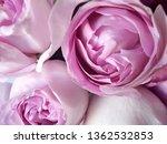 pink rose bouquet | Shutterstock . vector #1362532853