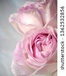 pink rose bouquet | Shutterstock . vector #1362532856