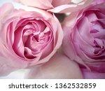 pink rose bouquet | Shutterstock . vector #1362532859