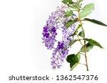 Purple Wreath Flowers With 5...