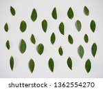pattern of green leaves on a... | Shutterstock . vector #1362554270
