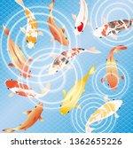 japanese carp fish on a blue... | Shutterstock .eps vector #1362655226