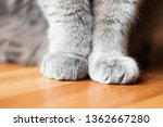 soft cat paws sitting on floor | Shutterstock . vector #1362667280