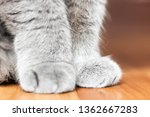 soft cat paws sitting on floor | Shutterstock . vector #1362667283