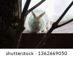 Small photo of rabbit white hide and seek. hiding from a predator. danger, risk of loss of life. death
