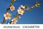 beautiful nature scene with...   Shutterstock . vector #1362688700