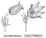 flower set tulips graphic... | Shutterstock . vector #1362708833