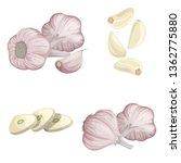 garlics set. cartoon flat style ... | Shutterstock .eps vector #1362775880
