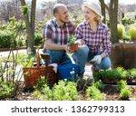 portrait mature couple looking...   Shutterstock . vector #1362799313