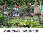 Allotment Plots With Netting To ...