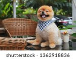 brown pomeranian dog happy... | Shutterstock . vector #1362918836