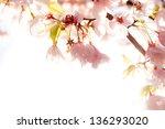 Spring cherry blossom border. selective focus - stock photo