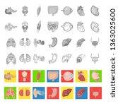 human anatomy color flat  line...   Shutterstock .eps vector #1363025600