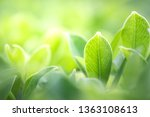 closeup beautiful view of... | Shutterstock . vector #1363108613