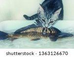 Gray Kitten Hunts Big Fish....