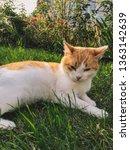 green eyes cat enjoying summer...   Shutterstock . vector #1363142639