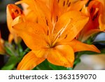 orange lily bloom flower close... | Shutterstock . vector #1363159070