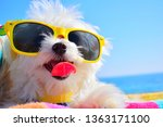 Funny Dog Puppy With Sunglasse...