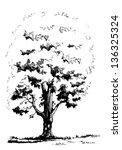 maple tree | Shutterstock .eps vector #136325324