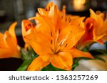 orange lily bloom flower close... | Shutterstock . vector #1363257269