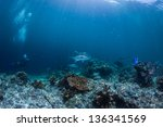 scuba diving with grunts fish | Shutterstock . vector #136341569