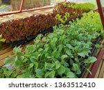 fresh organic vegetable... | Shutterstock . vector #1363512410