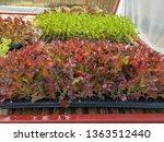 fresh organic vegetable... | Shutterstock . vector #1363512440