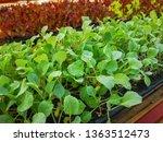 fresh organic vegetable... | Shutterstock . vector #1363512473
