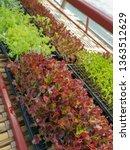 fresh organic vegetable... | Shutterstock . vector #1363512629