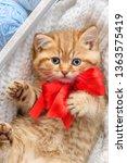 little striped kitten  in a box ... | Shutterstock . vector #1363575419