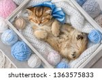 little striped kitten sleeping... | Shutterstock . vector #1363575833