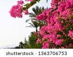 Beautiful Pink Branch Magenta...