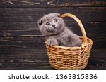 Stock photo scottish fold kitten funny gray kitten in the basket a kitten put a paws on the edge of the 1363815836