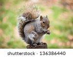 Squirrel Eating A Peanut...