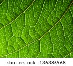 Macro Of Fresh Green Leaf As...