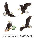 Set Of Bald Eagles   Flying And ...