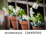 shelves with pots of flowers   Shutterstock . vector #136409303
