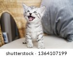 Stock photo the kitten screams the kitten laughs kitten scared 1364107199
