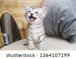 Stock photo the kitten screams the kitten laughs kitten scared 1364107199