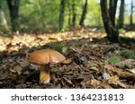 bay boletus in forest | Shutterstock . vector #1364231813