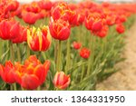 awesome bright red flowering... | Shutterstock . vector #1364331950
