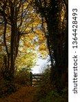 golden autumn colour and... | Shutterstock . vector #1364428493